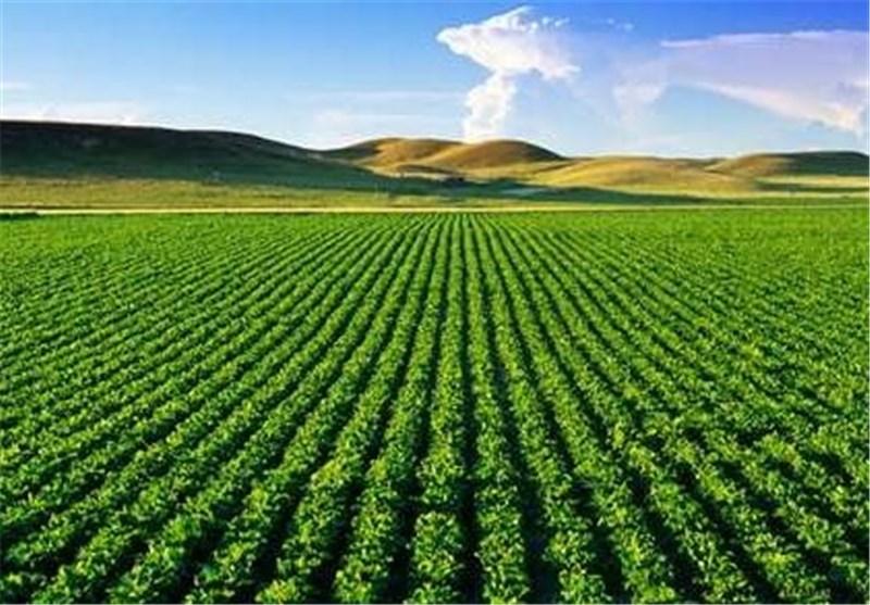هیچ نوع بذر تراریختهای به کشور وارد نمیشود