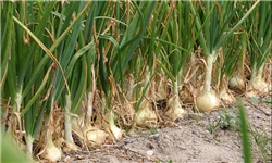قانون پایش باقیمانده سموم در محصولات کشاورزی بعد از ۵۰ سال کامل اجرا نشده است