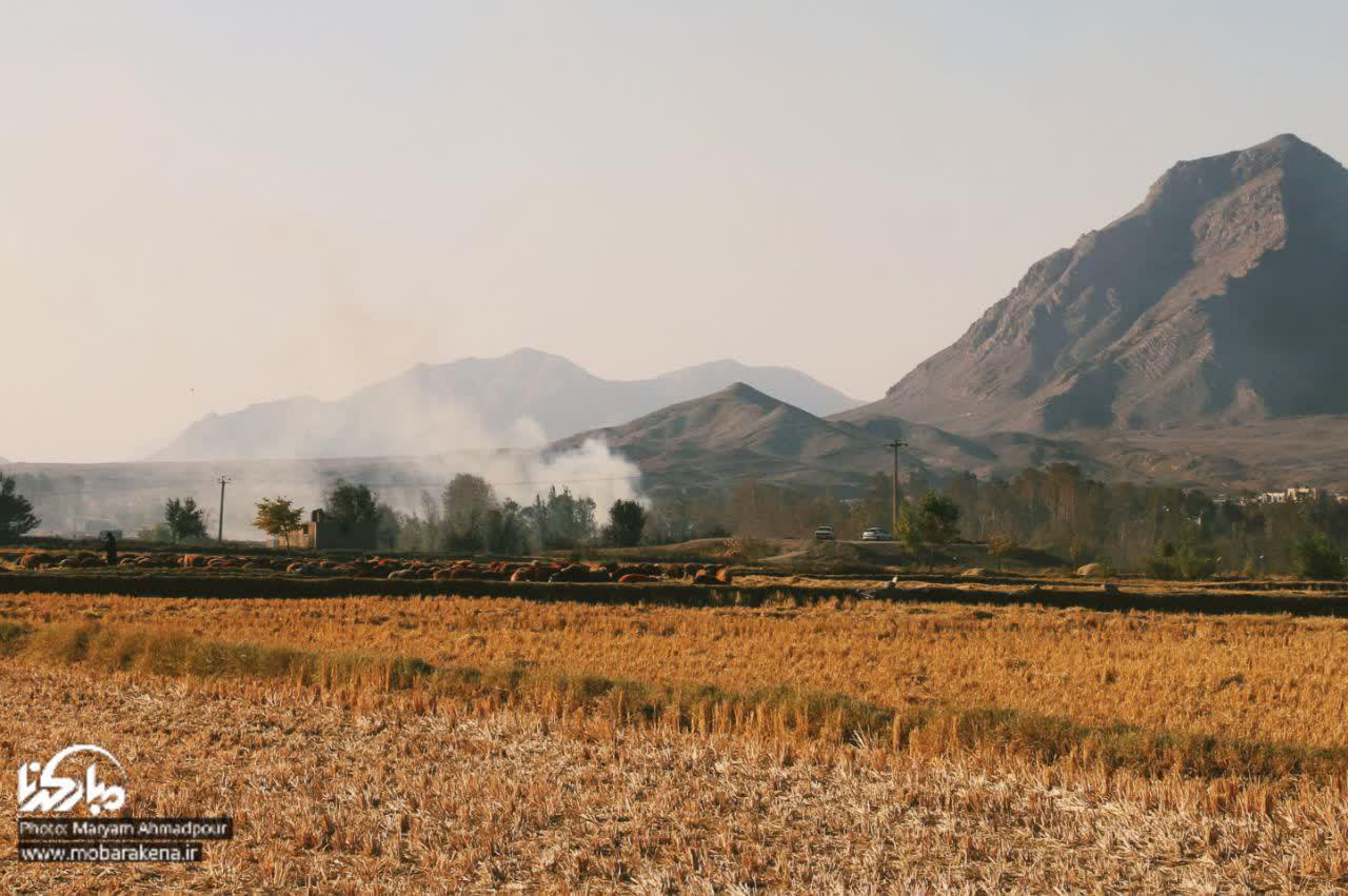تصاویر آتش به جان زمین های کشاورزی در مبارکه